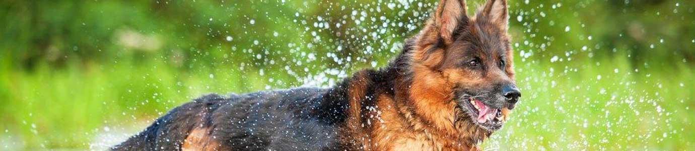 impfung gegen zecken hund