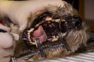 Zahnreinigung am Unterkiefer