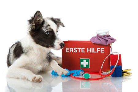 Erste Hilfe für Ihr Tier