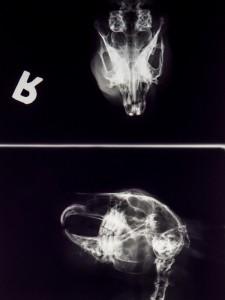 Zahnheilkunde Kaninchen